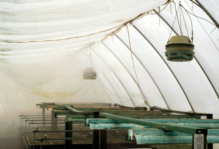 Photo showing a greenhouse with fog inside.