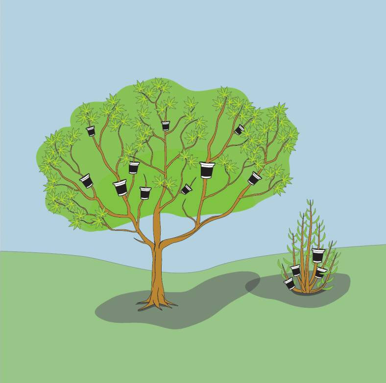 Illustration showing use of pot layering on both a tree and a shrub.